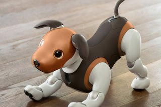 Aibo will also be released in brown and white colors